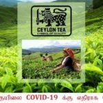 இலங்கை தேயிலை COVID-19 க்கு எதிராக செயற்படுமா?
