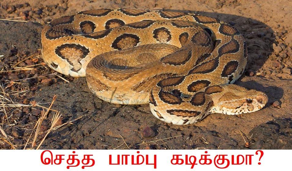 செத்த பாம்பு கடிக்குமா? Is dead snake Kills?
