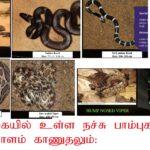 இலங்கையில் உள்ள நச்சு பாம்புகளும் அடையாளம் காணுதலும் Poisonous Snakes identification