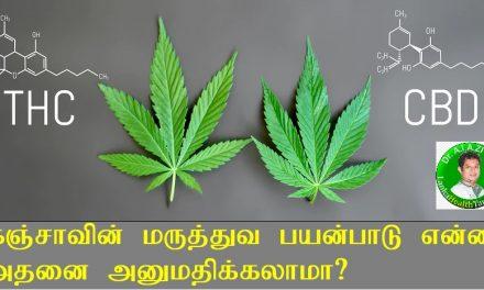 கஞ்சா மருந்தா? தீங்கா? Cannabis Uses and Side Effects